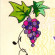 Music in the Vineyard logo 200x200